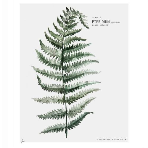 affiche-urban-botanic-pteridium