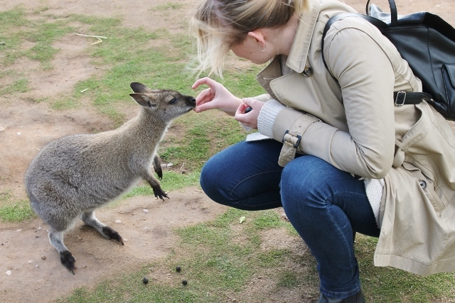 Katy feeding a wallaby