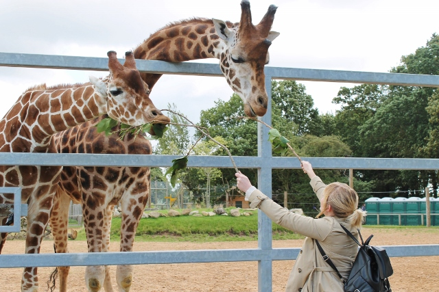 Katy feeding the giraffes