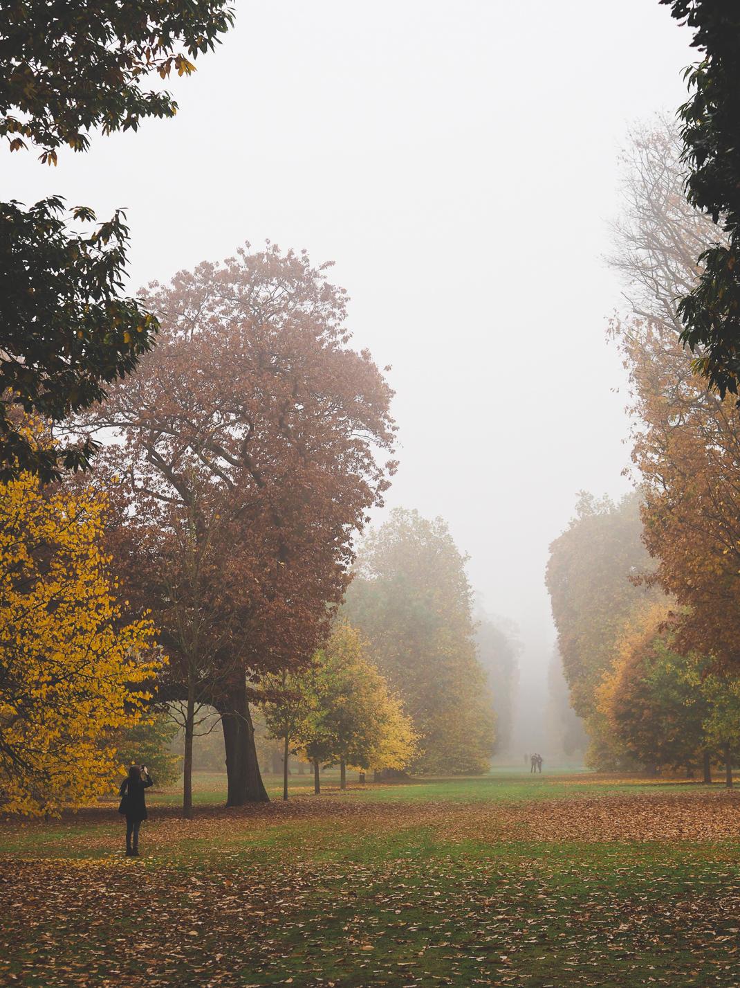 misty trees in kew gardens