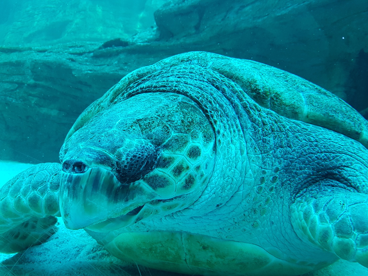 Sea turtle at Two Oceans Aquarium V&A Waterfront