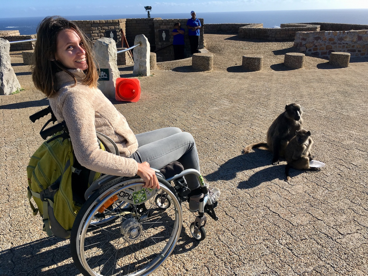 Wild baboons in wheelchair-friendly Cape Point Nature Reserve