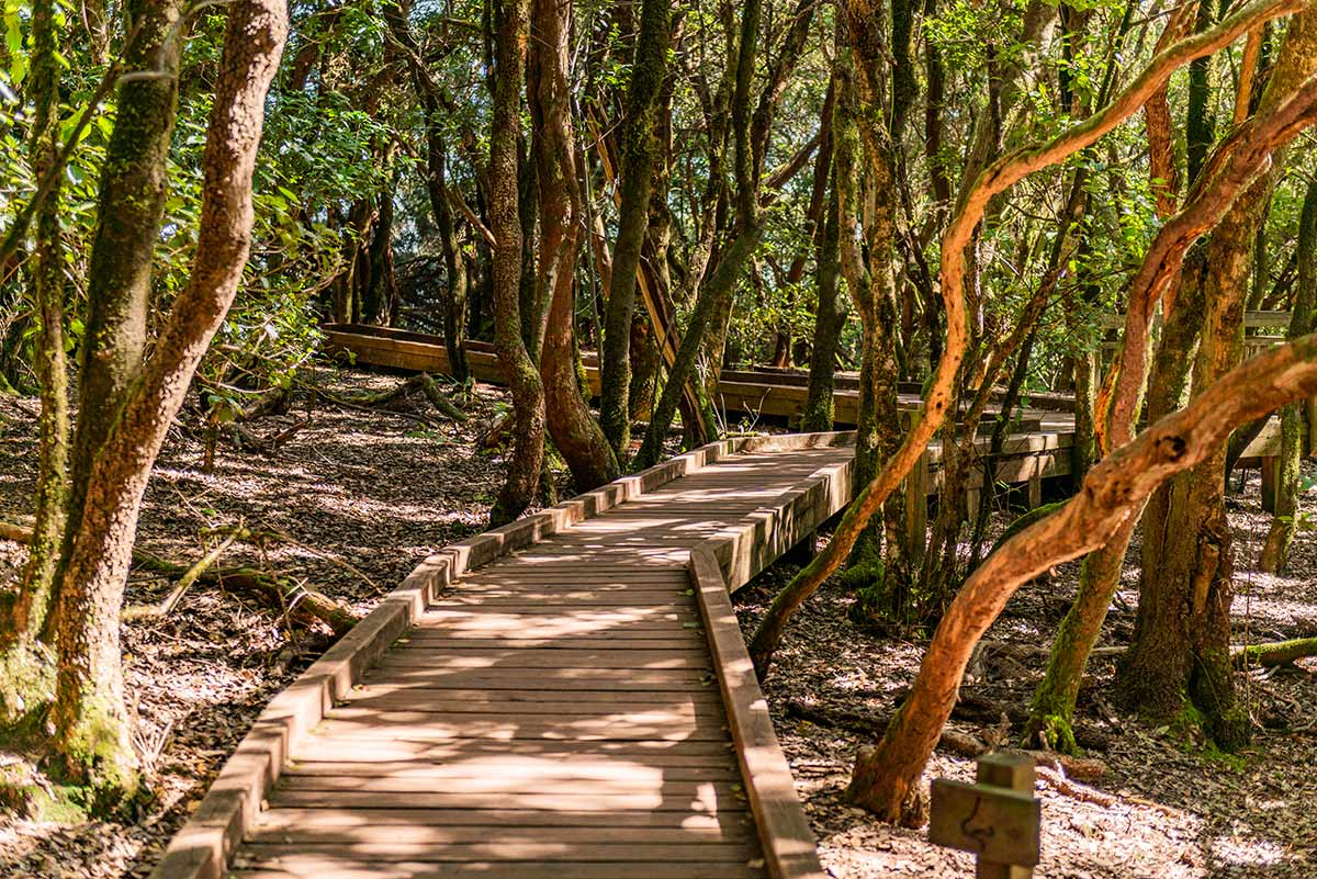 Accessible Path of the Senses trail in Anaga Rural Park