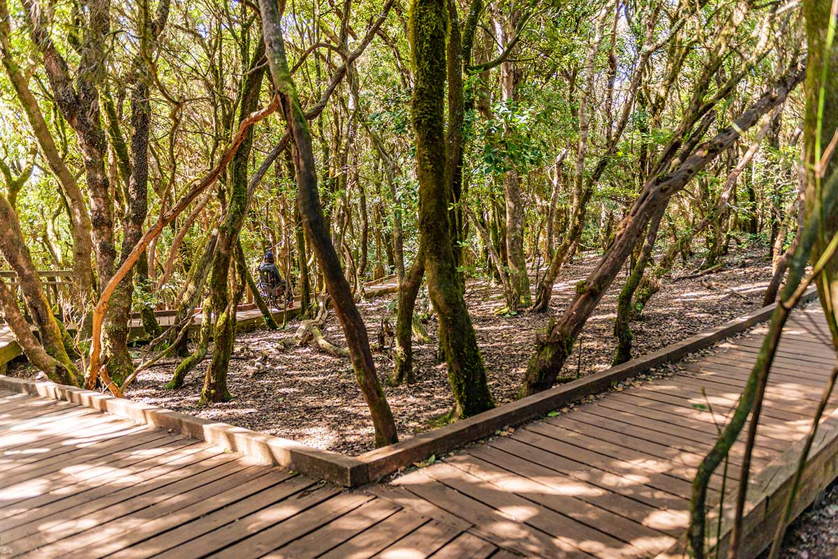 Accessible walkway in Anaga Forest