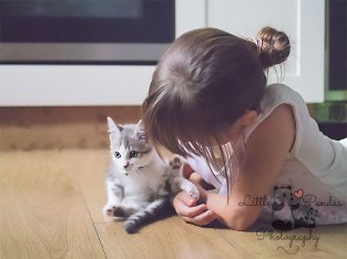 Girl with grey kitten