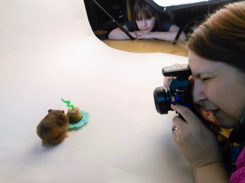 Hamster cake smash behind the scenes
