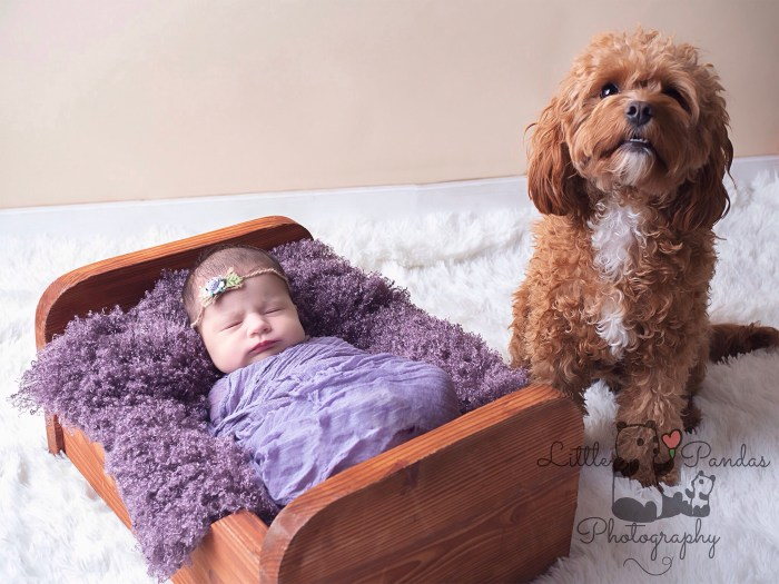 Newborn photography baby with cavapoo dog