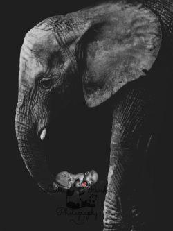 Jack-elephant
