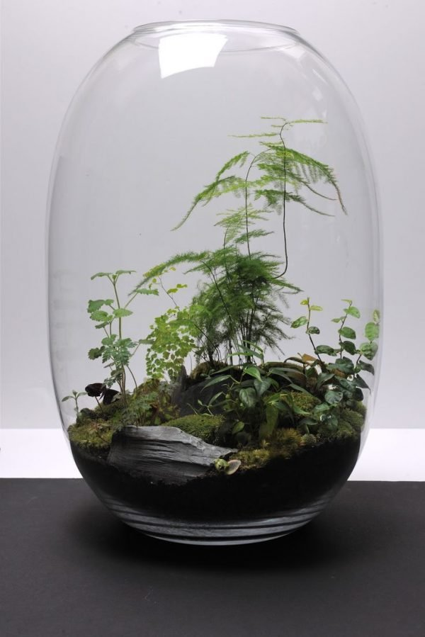 Unusual Plant Containers