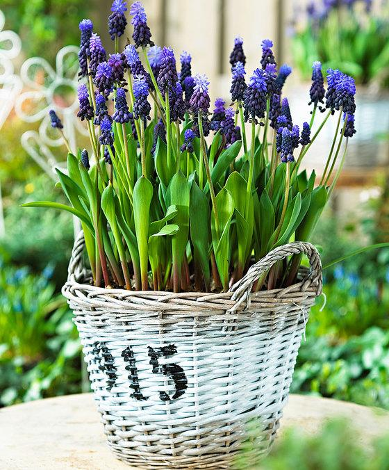 wicker garden baskets