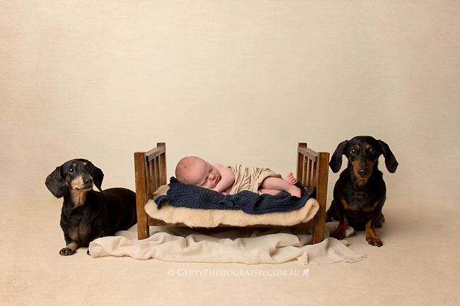 newborn and dog puppy dachshund photos