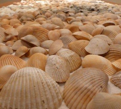 Sorting my Clean Seashells