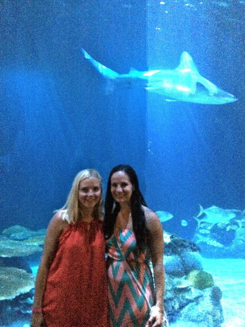 Shark at the Shedd