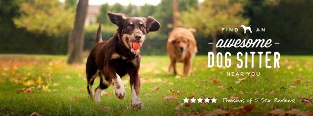 DogVacay Dog Sitter