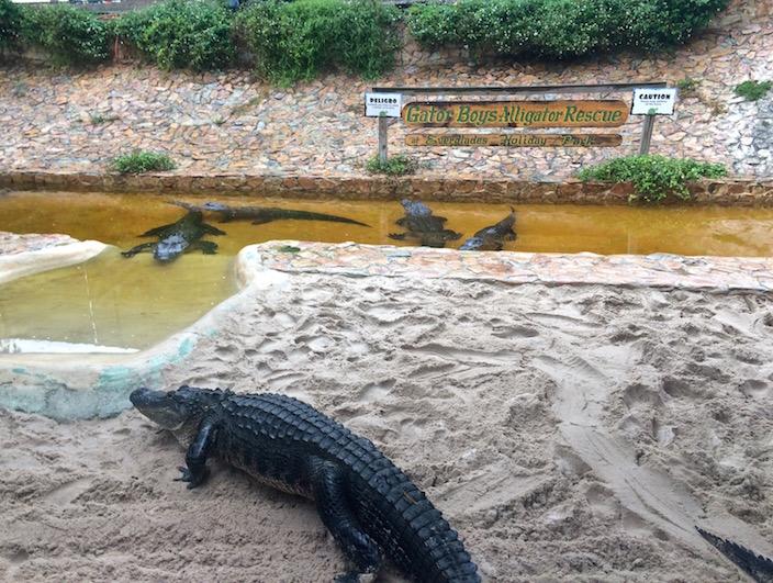 Gator Boys Alligator Rescue