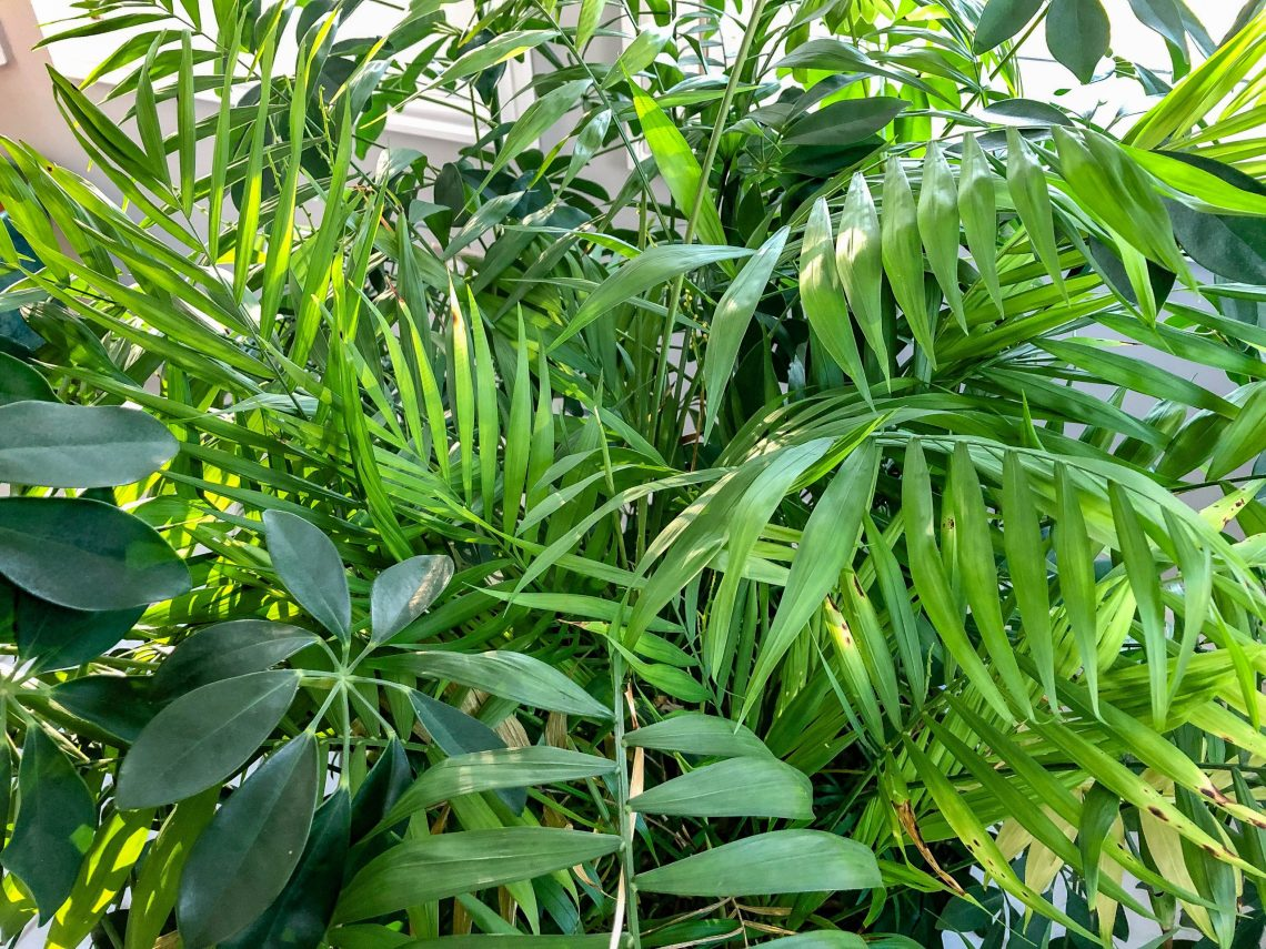 Plant greenery