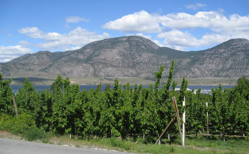 Wine Tasting:  The Golden Mile