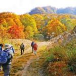 【10年後の常識!】一番ストレスにならずに歩ける時間 気分良く歩ける時間を作る 第 430号