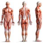 健康寿命を伸ばす為には若返り筋を弱らせないことが何よりも大切 !  第 1,810 号