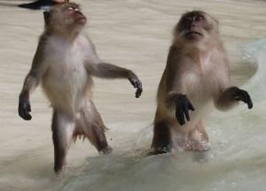 Zombie Monkeys Ko Phi Phi, Low Season in Krabi, Thailand, Asia