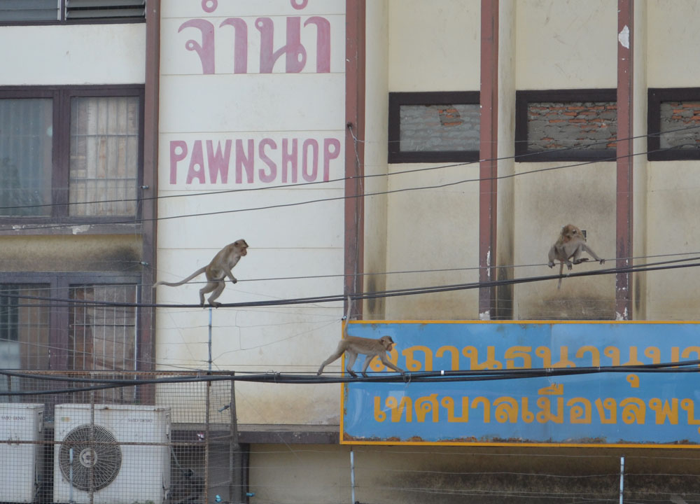 Telephone Wires, Lopburi Monkey Town in Thailand, Southeast Asia