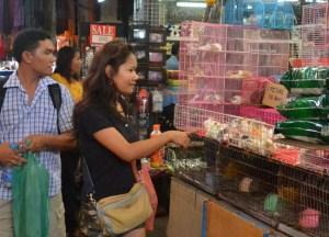 Baby Rabbits, Animal Cruelty Pets at JJ Market Bangkok, Southeast Asia