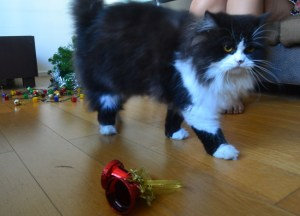Persian Cat Bought Online from Bangkok Family, Southeast Asia