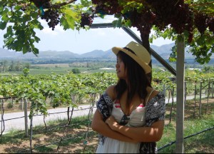 Grapevines, Hua Hin Hills Vineyard Tour, Wine Thailand, Southeast Asia