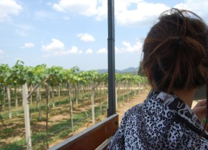 Vineyard Grapes Tour, Hua Hin Hills Vineyard, Thailand, Southeast Asia