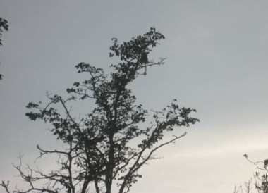 Proboscis Monkeys Beaufort, Where to Find Monkeys in Southeast Asia?