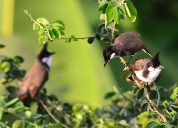 Early Birds BKK, Living for the Weekdays Lifestyle Design in Bangkok