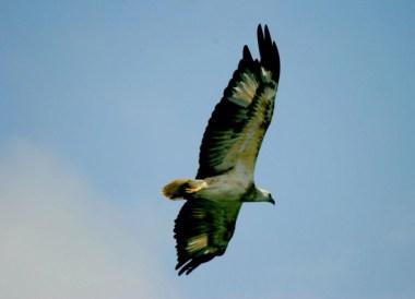 Eagle Feeding, Quick Guide to Langkawi, Pantai Cenang Beach