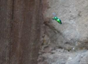 Neon Green Jungle Bugs, Thailand-Cambodia Border Crossing, SE Asia