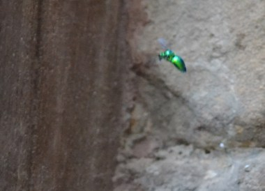 Neon Bugs, Exploring Khmer Temples in Surin Thailand, Southeast Asia