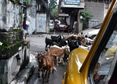 Chowringhee Lane Kolkata, Tourist Areas of Kolkata City Centre, India