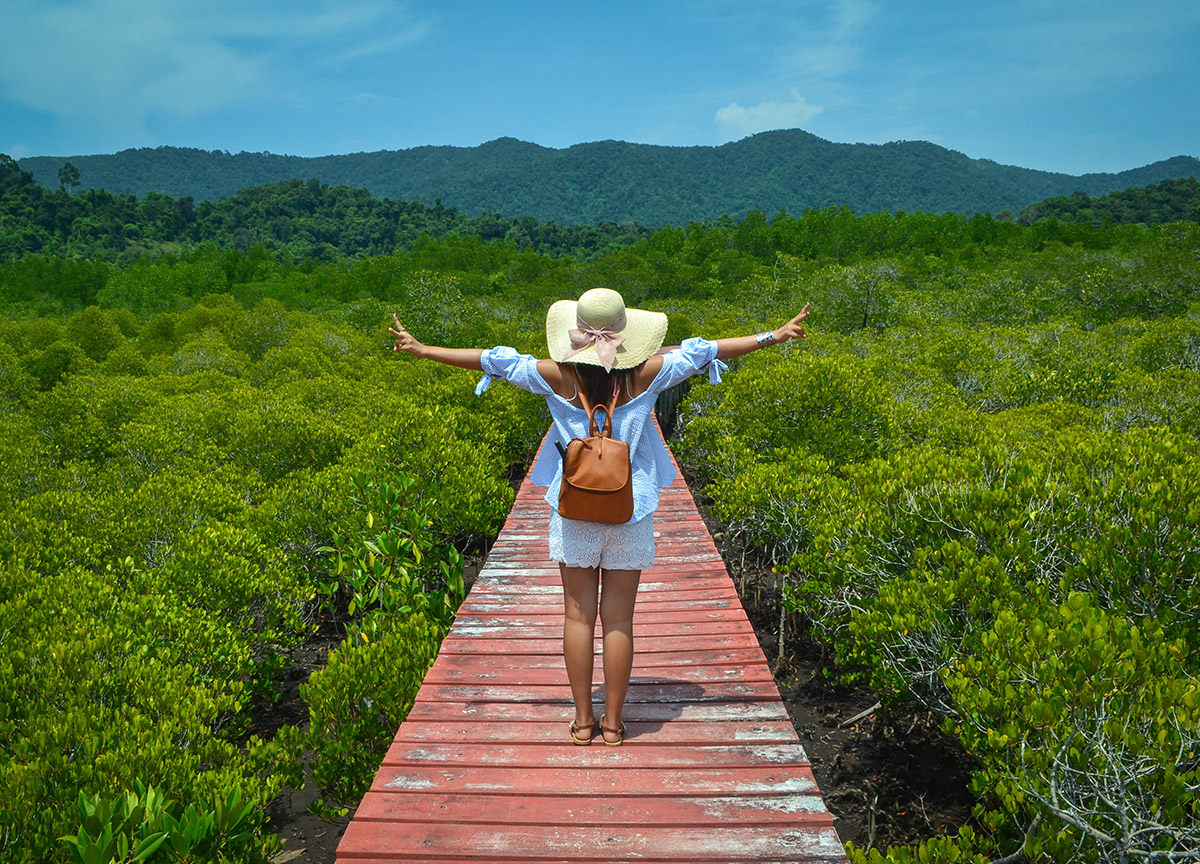 Mangrove Treks, Best Romantic Resorts in Koh Chang Islands