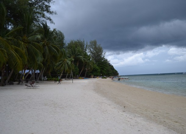 Coconut Palms, How to Open, Prepare and Eat Coconuts