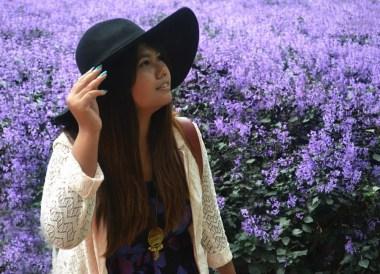 Purple Lavender Farm, Cameron Highlands Resort, Malaysia