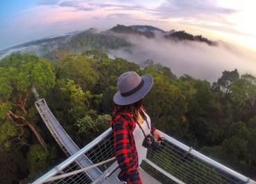 Gopro Views of Ulu Temburong Brunei, Borneo Rainforests