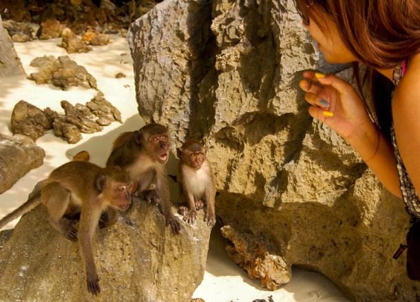 Monkey Beach, Best Ko Phi-Phi Tours from Phuket, Maya Bay Beach
