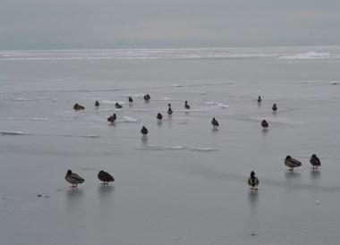 Frozen Lake, Winter Road Trip in East Central Europe