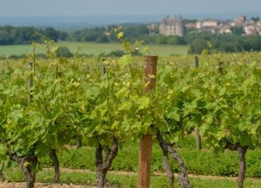 Cognac Region, Road Trip in France Southern Borders June