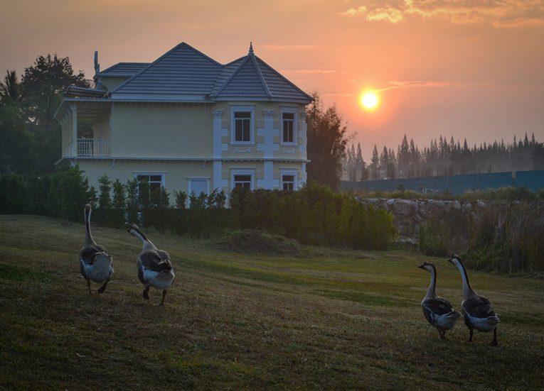 Geese at Chateau, Top Attractions in Khao Yai , Bangkok Travel
