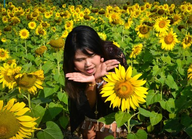 Sunflowers Field, Romance in Khao Yai DusitD2 Resort Thailand