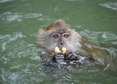 Langkawi Geoforest Park Tour Kilim, Resorts World