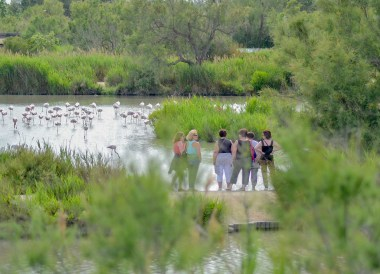 Le Parc Ornithologique de, Camargue National Park Flamingos and Wild Horses
