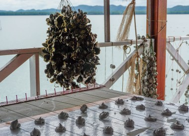 Oyster Houses at Kung Krabaen Bay, Travel in Eastern Thailand