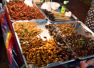 Fried Meal Worms. Unusual Asian Food/Weird Foods in Asia