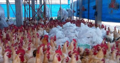 LLL-Live Let Live-Islamic State terrorist dies in custody with bird flu in Mosul hospital