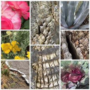 morning walk: rotted wood, roses, yarrow, red cabbage, potholes
